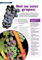 GI-Grapes.jpg
