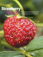 GYO-Strawberry-Yields.jpg
