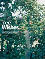 GYO-Tree-Wishes.jpg