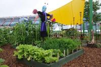 bbcgw-carrot-onion-lettuce-bed-001.jpg