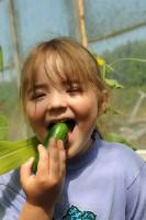 cucumber-cucino-003.jpg