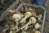 onion-giant-exhibition-009.jpg