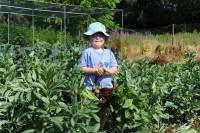 picking-broad-beans-004.jpg