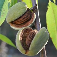 sq-almond-robijn-006.jpg