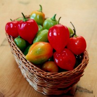 sq-chilli-pepper-habanero-caribbean-red-001.jpg