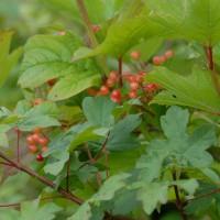 sq-conservation-hedge-002.jpg