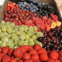 sq-fruit-basket-009.jpg