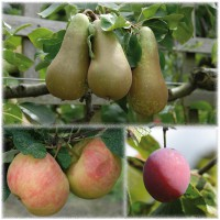 sq-fruit-tree-favourites-collection.jpg