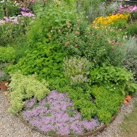 sq-hampton-herb-bed-001.jpg