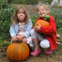 sq-harvesting-pumpkins-017.jpg