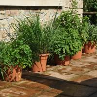 sq-herbs-at-home-001-crop.jpg