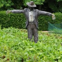 sq-le-manoir-veg-garden-sca.jpg