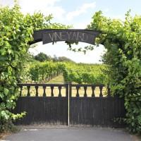 sq-leeds-castle-vineyard-001.jpg