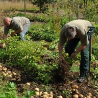 sq-lifting-potatoes-003.jpg