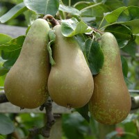 sq-pear-conference-003.jpg