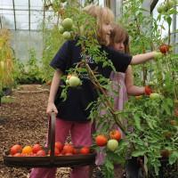 sq-picking-tomatoes-007.jpg