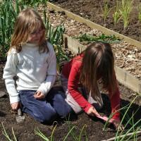 sq-planting-onions-005.jpg