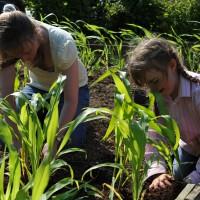 sq-planting-sweetcorn-001.jpg