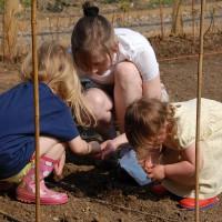 sq-sowing-peas-001.jpg