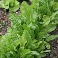 sq-spinach-perpetual-001.jpg