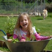 sq-wheelbarrow-of-herbs-001.jpg