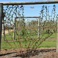 sq-wisley-kings-acre-berry-001.jpg