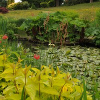 sq-wisley-ponds-002.jpg