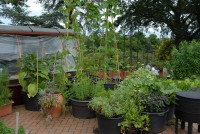 wisley-container-vegetable-gardening-001.jpg