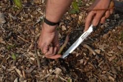 cutting-asparagus-002.jpg
