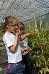 picking-tomatoes-009.jpg