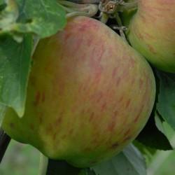 sq-apple-lanes-prince-albert-002.jpg
