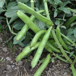sq-broad-bean-the-sutton-003.jpg