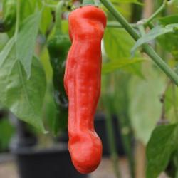 sq-chilli-pepper-peter-pepper-007.jpg