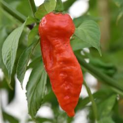 sq-chilli-pepper-shabu-shabu-001.jpg