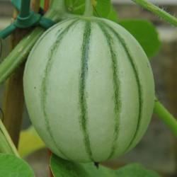 sq-melon-charentais-002.jpg