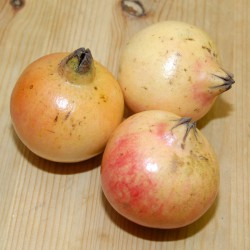 sq-pomegranate-002.jpg
