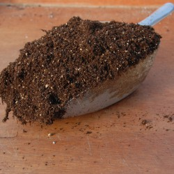 sq-pricking-out-compost-001.jpg