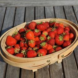 sq-strawberry-basket-001.jpg