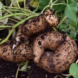 sq-sweet-potato-o-henry-001.jpg