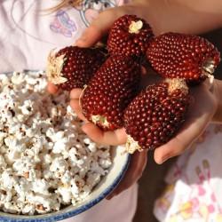 sq-sweetcorn-strawberry-popcorn-003.jpg