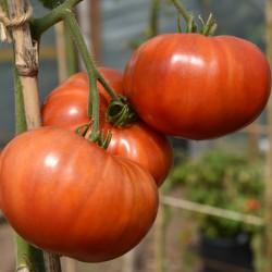 sq-tomato-akers-west-virginia-002.jpg