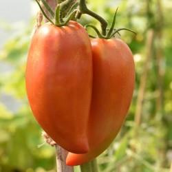 sq-tomato-long-tom-002.jpg