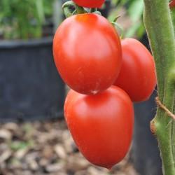 sq-tomato-outdoor-girl-003.jpg