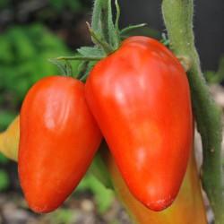 sq-tomato-san-marzano-redorta-003.jpg