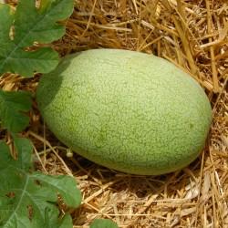 sq-watermelon-charleston-grey-002.jpg