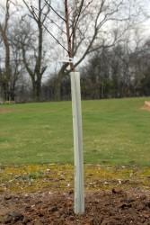 tree-guard-002.jpg