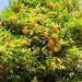 citrus-orange-002.jpg