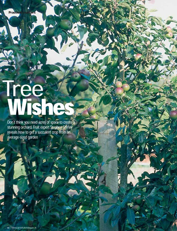 Image of the magazine article 'Tree Wishes'