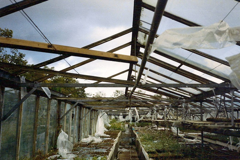 Image of damage caused by the 1987 hurricane.