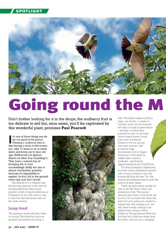 Image of the magazine article 'Going Round The Mulberry Bush'